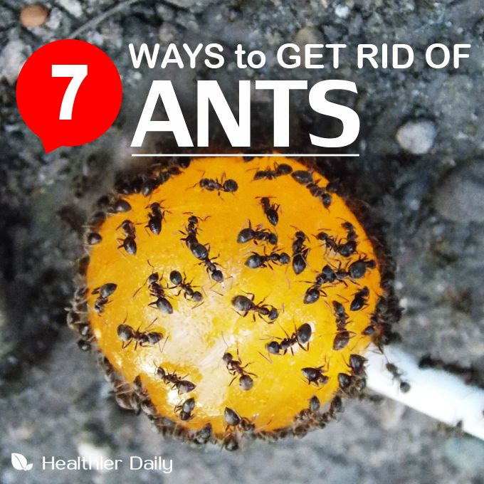How To Get Rid Of Tiny Ants In Bathroom