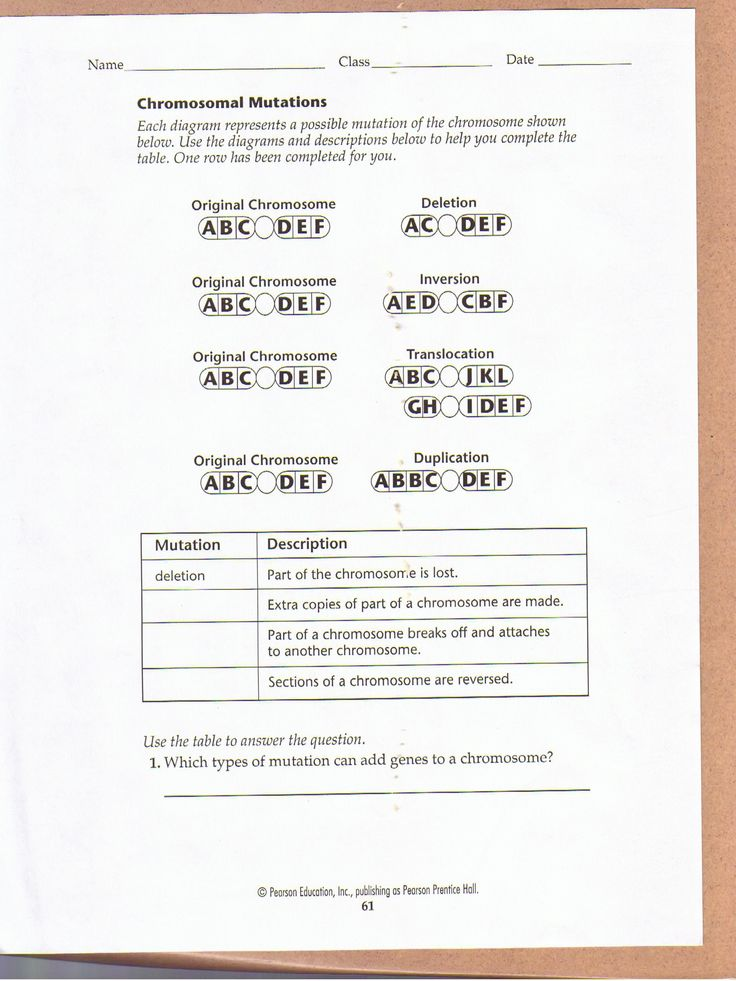 Chromosomal Mutations Worksheet Education Biology border=