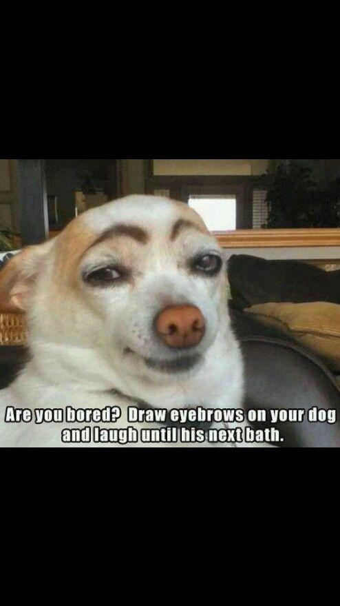 Haha my dog has eyebrows so i cant do this