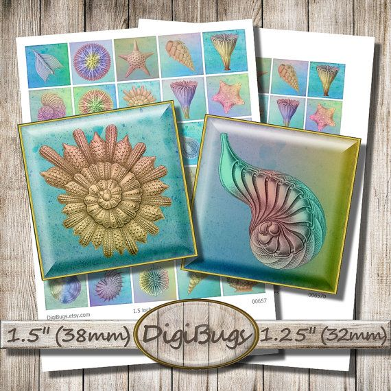 """Sea Creatures, Digital Collage Sheet, 1.25"""" , 1.5 inch Squares, Starfish Shell Coral, Haeckel Images, Sea Magnets, Printable A4 Sheet, b1"""