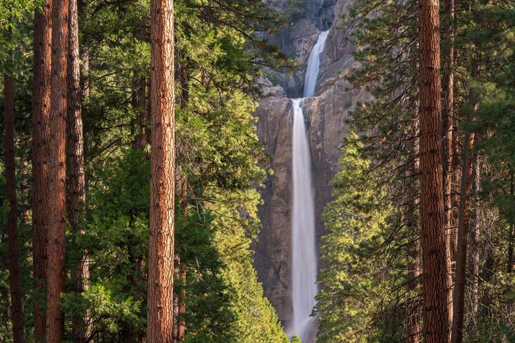 Bosque de Yosemite, Estados Unidos - Bosques del mundo que parecen encantados