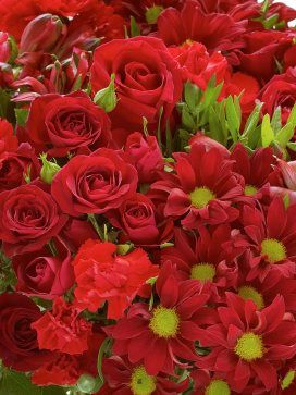 Luscious red chrysanthemums, carnations, roses and alstroemeria for Valentine's Day | Tesco flowers