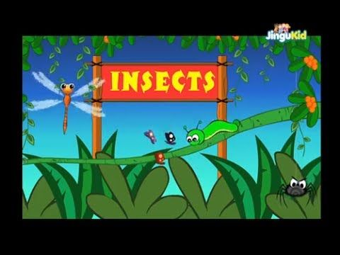 Learn About Insects | Easy Learning for Children | Kids Educational Videos - YouTube