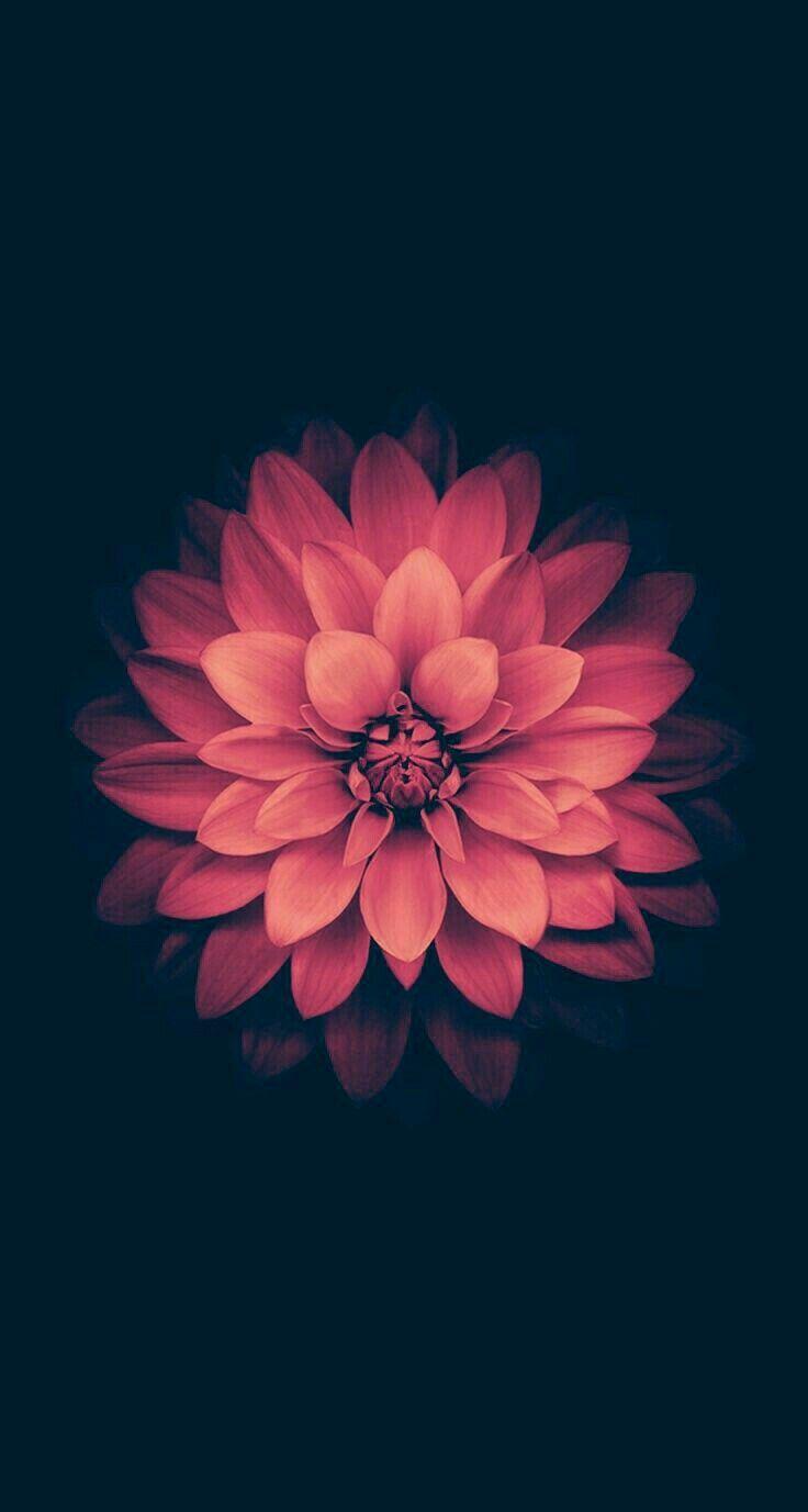 Fantastic nice flower wallpaper