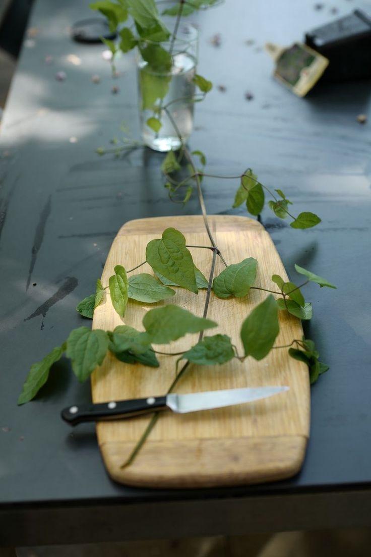 Hast du eine Clematis, die sich bei dir im Garten bewährt hat und dich jedes Jahr wieder mit vielen Blüten erfreut? Wenn ja, dann willst du ja vielleicht genau von dieser Clematis eine weitere haben.