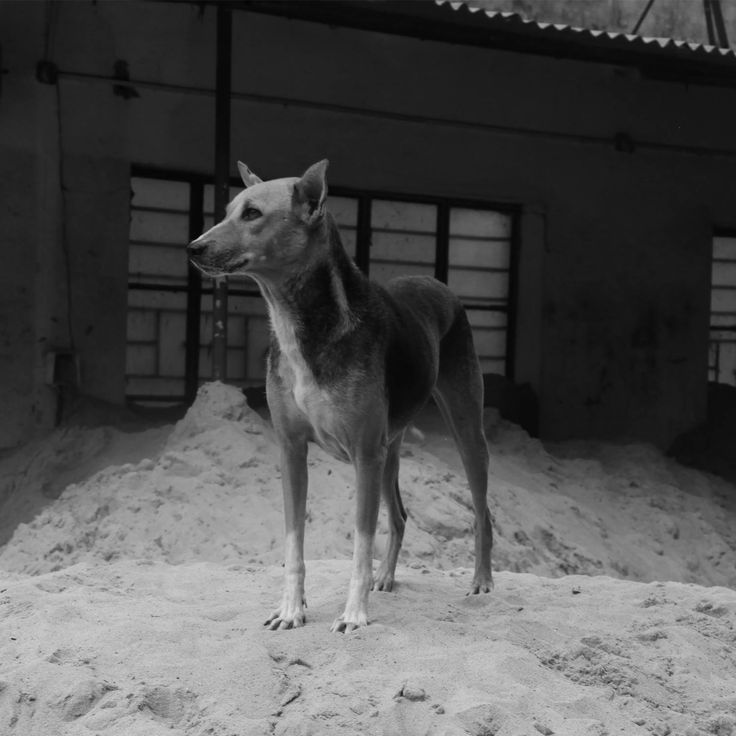 NABIL SABIO AZADI #NSAdiary #NSAbw #dog #India