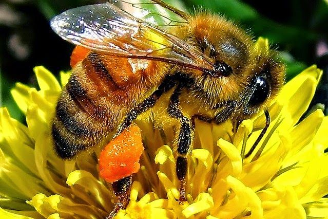 Types Of Bees On The Basis Of Gender, Apiary & Habit Of Sting                                                                                                                                                                                 More