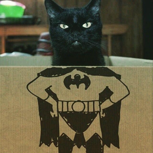 """""""#funny #cats #gambar #lucu #kucing #hatveling #cat #cute  hatveling.com"""""""
