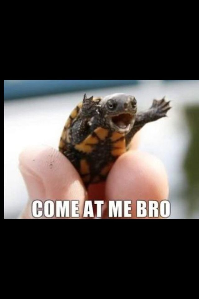 This is really funny if you like turtles here you go.