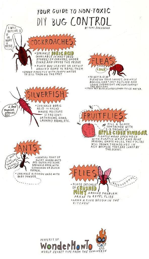 Your DIY Bug Repellent:  Roaches = boric   acid, bay leaves, catnip, soapy water;  Silverfish = boric acid; flies = ACV,   crushed mint; Ants = cinnamon, black pepper, baby powder; fleas = baking soda +   salt, lemon water