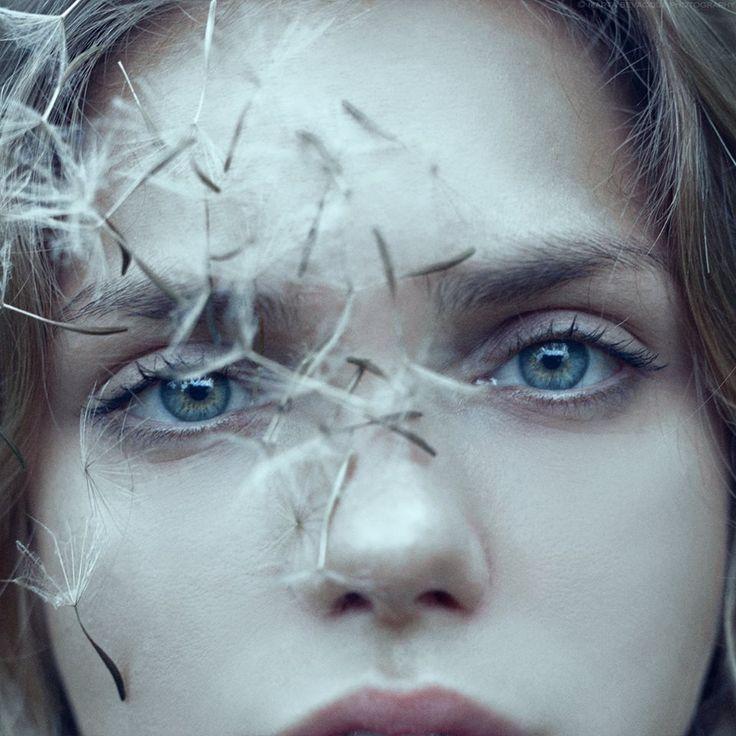 dandelion (irina @ crystal)