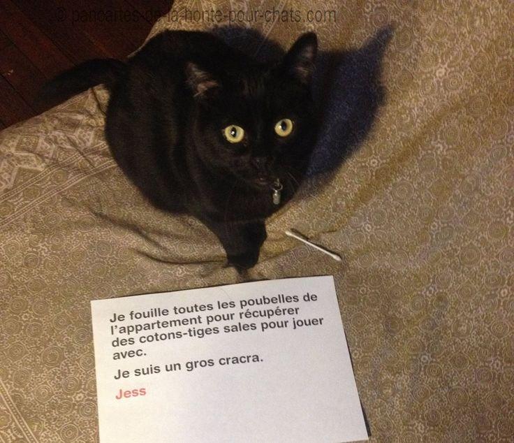 1.Jess-pancarte-de-la-honte-chats-lolcat-betiseÇa c'est un hobby particulier