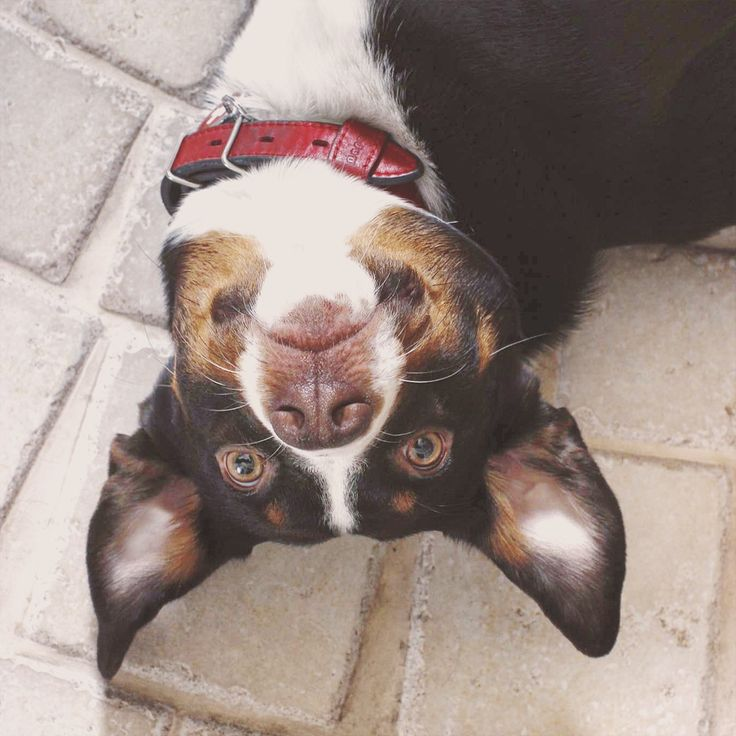 Собака, как не крути