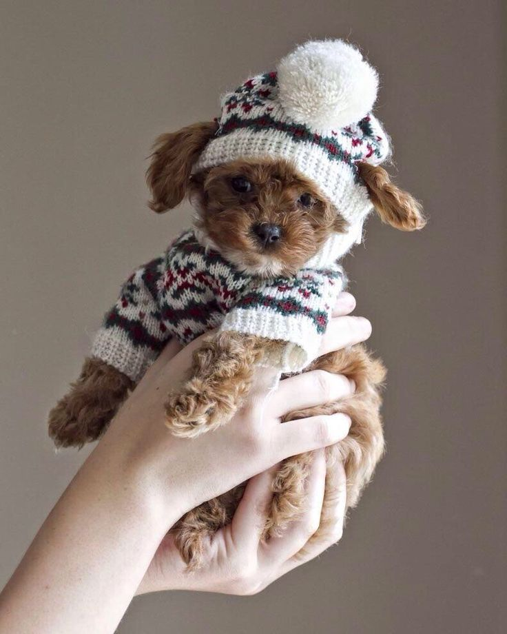 A puppy and a pom pom                                                                                                                                                                                 More