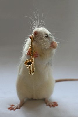 Orquesta de Ratas  mini  animales  cute