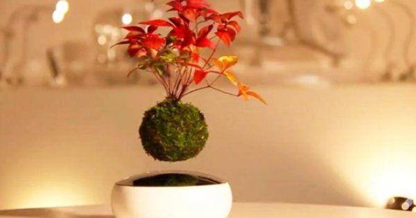 Летающие деревья бонсай – чудеса магнитной левитации | Первая полоса (Огород.ru)