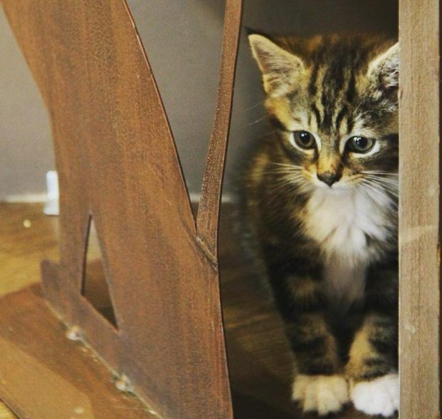 Attention cat-lovers: A kitty cafe is looking for people to join the team