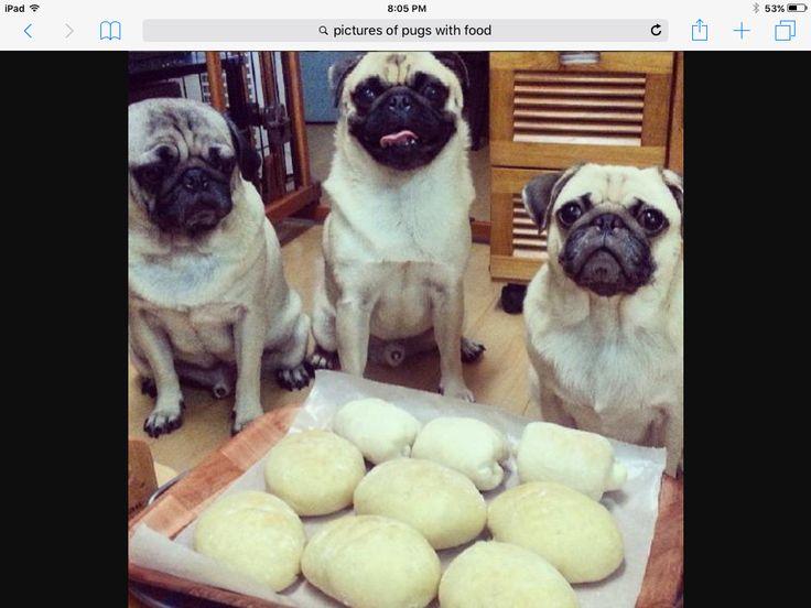 Pug bread.