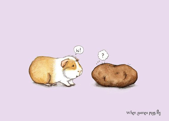 Pleased to meet you  Guinea pig with potato by WhenGuineaPigsFly, $10.00