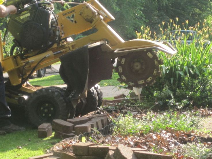 Using a stump grinder to remove shrubs. Have to hire someone to do it.
