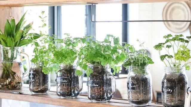 セリアのメイソンジャーでハーブ栽培!キッチンにオリジナルのハーブガーデンを♪|LIMIA (リミア)