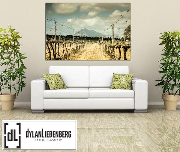 Cape Town Vineyard