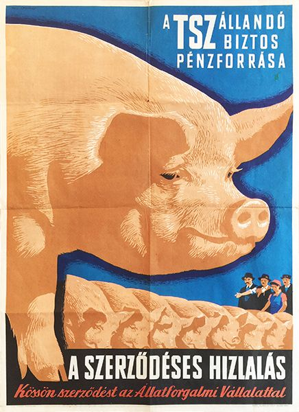 Gyorgy Pal, Contracted pig fattening, 1961