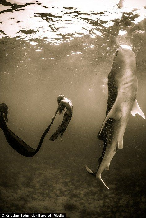 Underwater model Hannah Fraser in the Phillipines with a whale shark