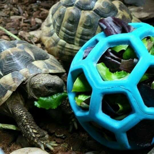 ♥ DIY Pet Stuff ♥  From Reptelligence group on Facebook                                                                                                                                                                                 More