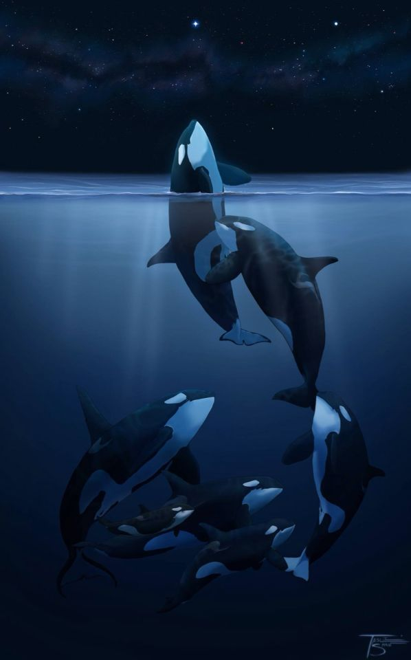 Orca Art This is how these beautiful creatures should be.  FREE