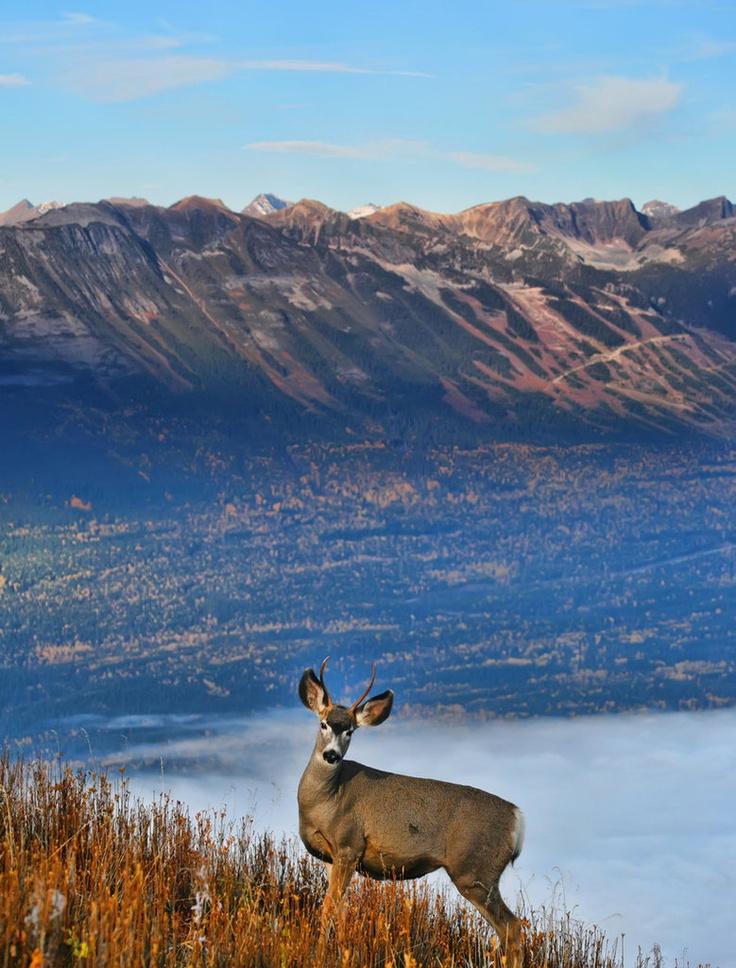 Deer 2 Picture Panorama2