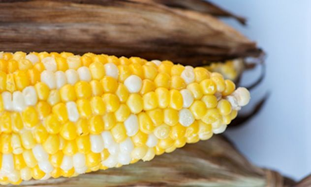 Don't forget that your favorite warm-weather veggies can be cooked on the grill, too. Follow these simple tips for great in-husk grilled corn.