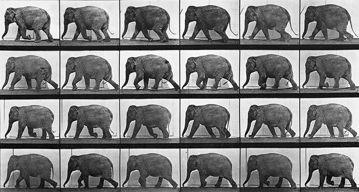 elefante-muybridge