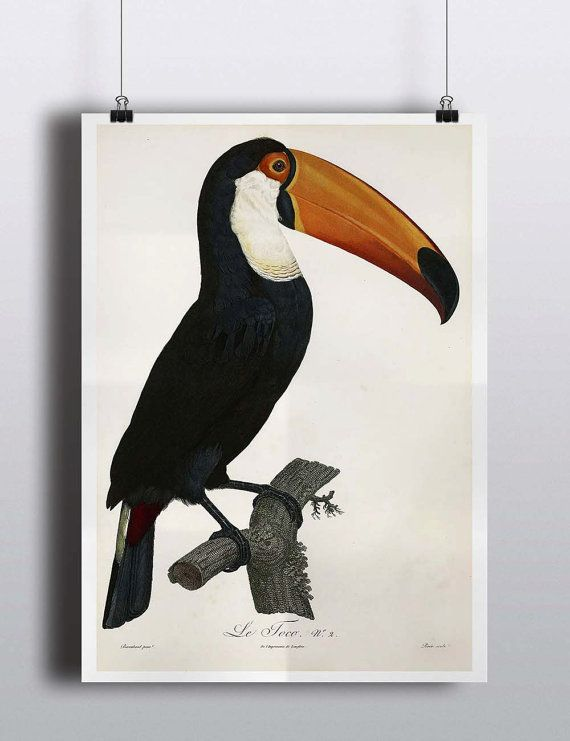 Antique Toucan Art Print Poster Antique Bird Prints Wall Decor Wall Art Tropical Decor Tropical Print Tropical Birds