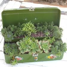 chest of succulents