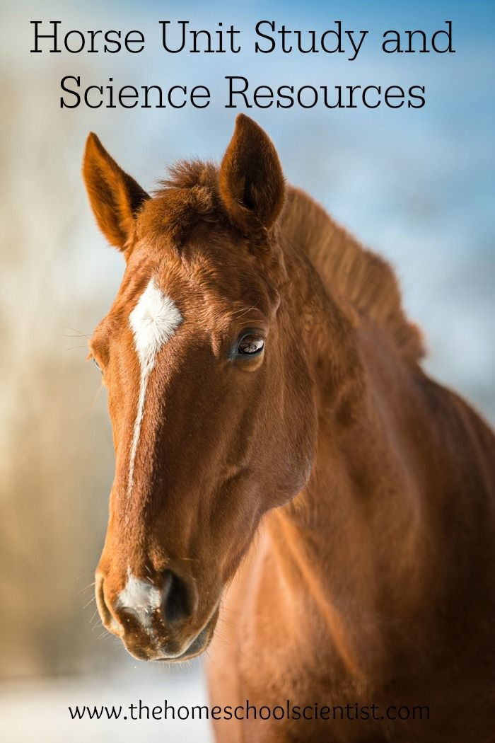horse unit study and science resources | The Homeschool Scientist