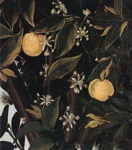 Botticelli la primavera : Gli arbusti alle spalle delle figure sono degli aranci, ritenuti simbolo di matrimonio perché si pensava fossero arance i frutti d'oro donati dalle Esperidi in occasione del matrimonio di Giove e Giunone.