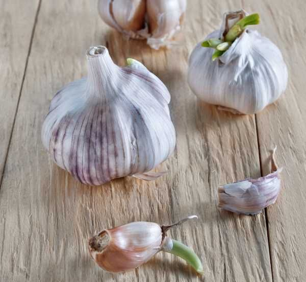 Does Garlic Go Bad How To Tell If Garlic Is Bad Kitchensanity Garlic Cooking Inspiration Food Preparation
