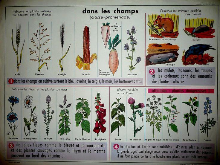 Manuels anciens: Dans les champs (plantes cultivées, plantes et fleurs sauvages…