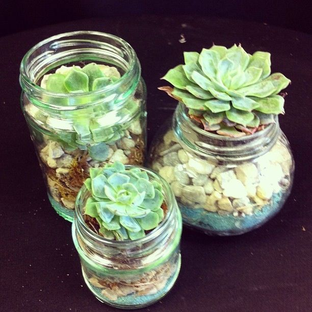 Succulents in glass jars