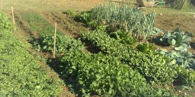 Δεκέμβριος και Κήπος: Εργασίες του Κήπου