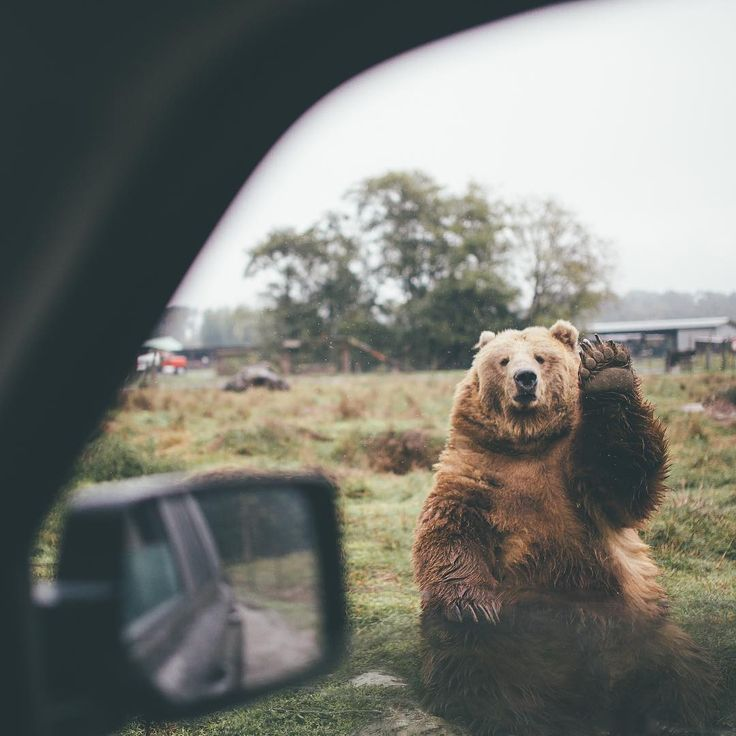 see you next time, bear!