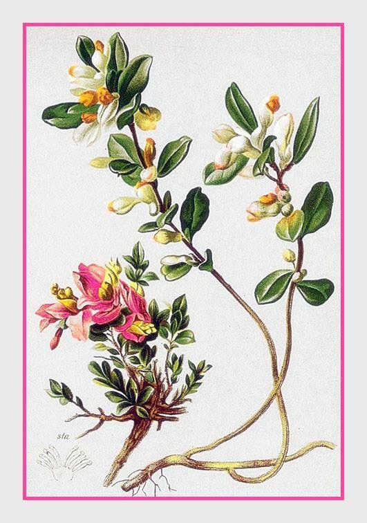 Best 20 planta ornamental ideas on pinterest for Planta ornamental venenosa dieffenbachia