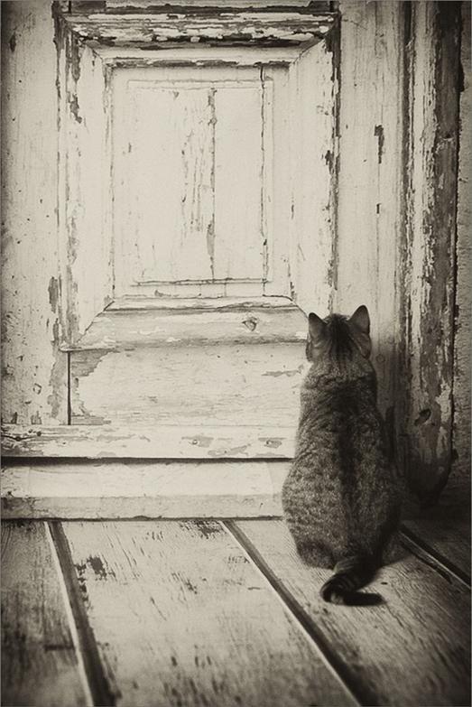 Let me in....