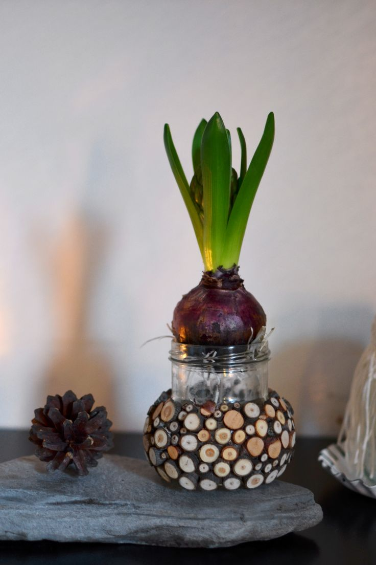 Kruka till hyacint