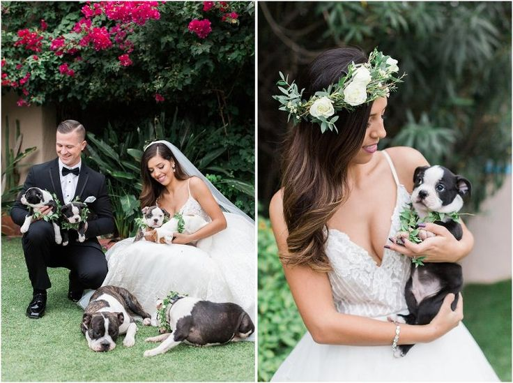 As seen on Style Me Pretty  Vendors: Venue: Hacienda Del Sol Wedding Planner: Rackel Gehlsen Weddings Florist/Decorator: Alexis Grace Florals Cinematography: Black Sheep Filmworks Hair + Makeup: Margarita GoDiva's I Do Hair and Makeup Artistry Team Dress: Hayley Paige from J Bridal Boutique Tuxedo: Tuxedos on Broadway  Hacienda Del Sol Puppy Bouquet Arizona Wedding Bride Groom Dog Family