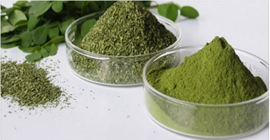 If you need to be healthier, have no problems with the body, have energy and live longer, this is the herb! Moringaoleiferais the magical plant of South Asia. It was used in tradition and medicine
