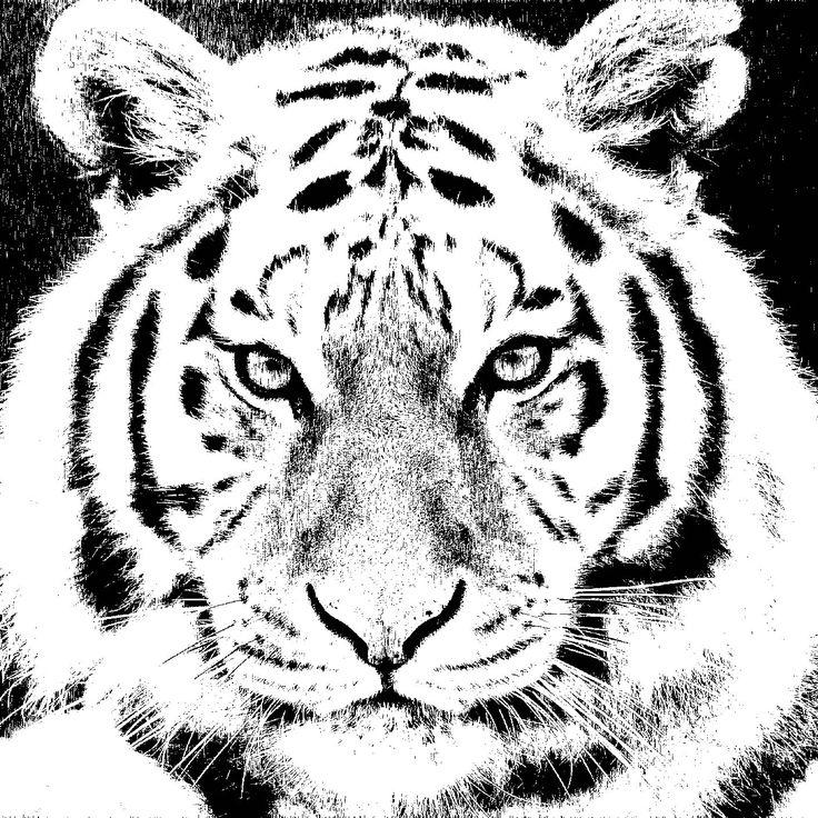 Ms de 25 ideas increbles sobre Ilustracin de tigre en Pinterest