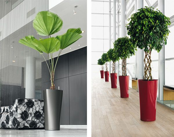 17 best decorating with large plants images on Pinterest | For the ...