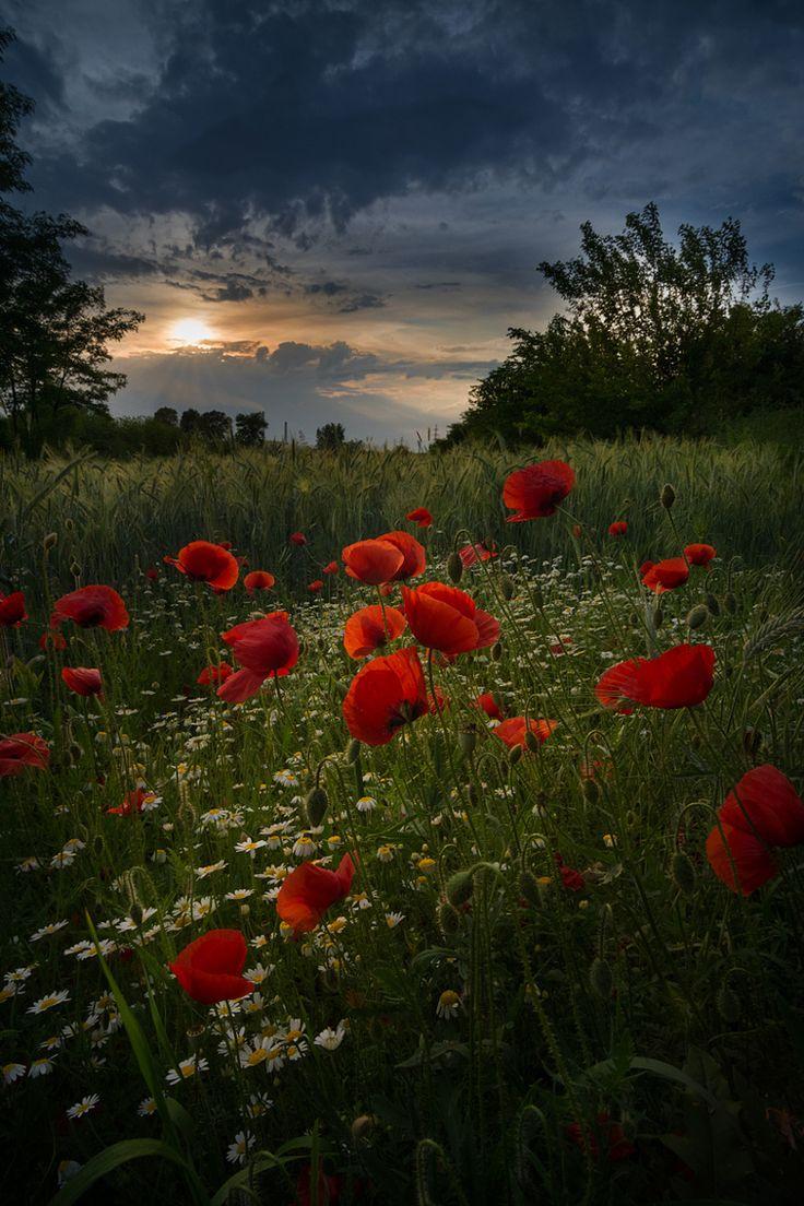 "wowtastic-nature: ""💙 Blush by Radu Baciu on 500px ○  800✱1200px-rating:93.7 ☀ Photographer: Radu Baciu, Bucharest, Romania """